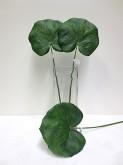 Lg. Galax Leaf