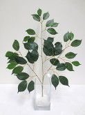 Ficus Leaf Spray