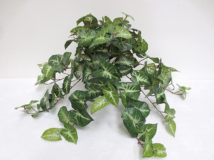 Sml. Syngonium Hanging Bush