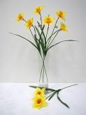 Daffodil Spray