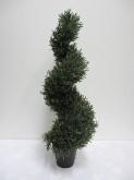 3′ Rosemary Spiral Tree