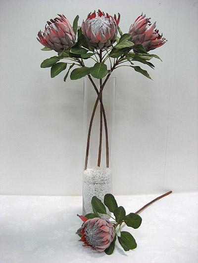 """29"""" Queen Protea"""