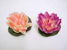 Single Floating Lotus