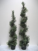 "51"" & 64"" Holland Ivy Spiral Tree"