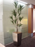 Hallway – Plant