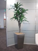 Meeting Room – Plant