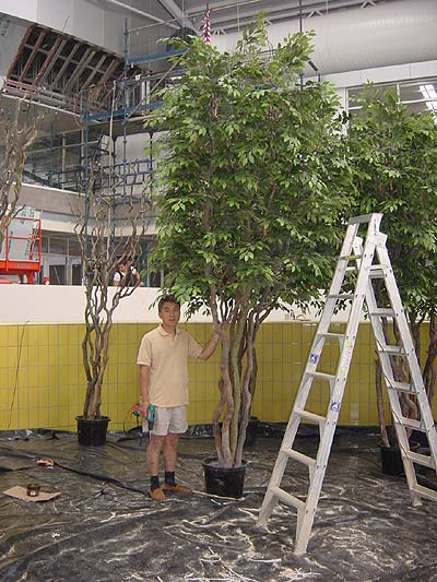 Large Trees – Construction Process