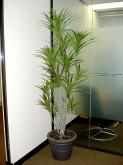 Entrance – Plant