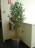 Hallway – Tree