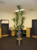 Work Area – Plant