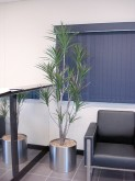 Reception – Plant