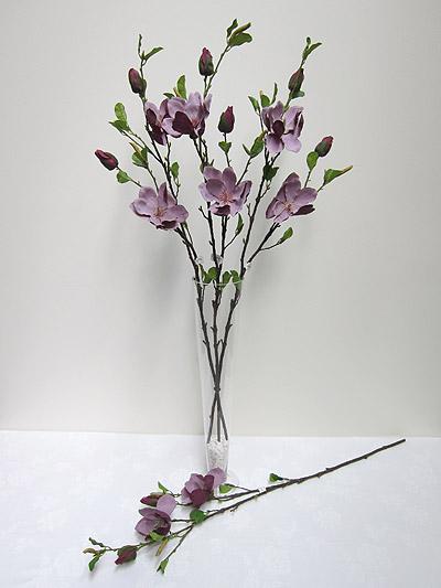 40′ Magnolia