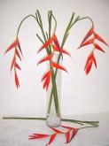 161cm Heliconia