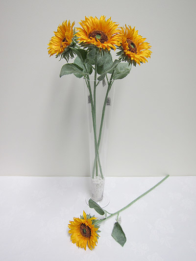 Single Large Sunflower
