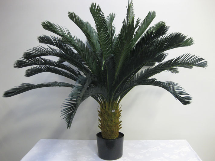 4′ Potted Cycas Palm