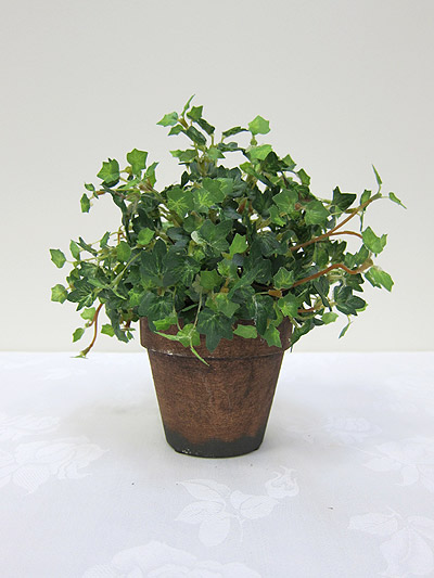 9&#8221; Mini Ivy in Pot