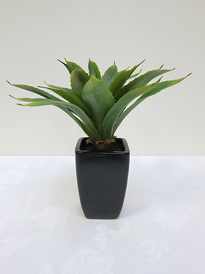 13&#8221; Agave in Fibreglass Pot
