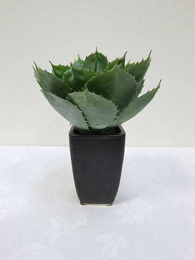 11&#8221; Round Agave in Fibreglass Pot