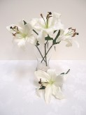 Tiger Lily Pick (White)