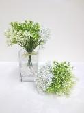 Star Flower Bundle