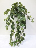 Large Pothos Hanging Bush