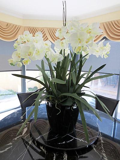 Lg. Orchid Arrangement