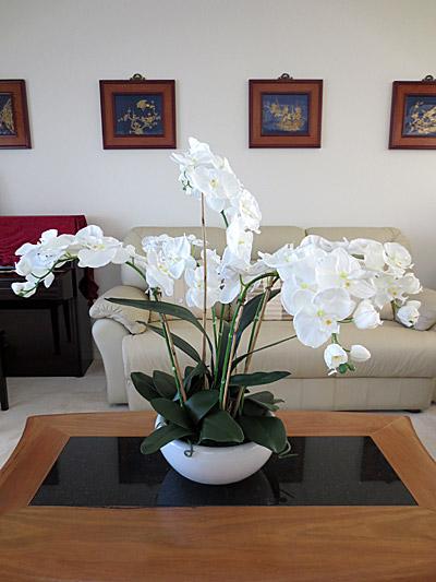 Lg. Phalaenopsis Orchids (White)