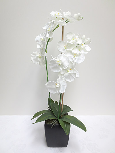 Tall Phalaenopsis Orchids White Code Flower Arrangement