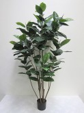 5′ Potted Rubber Plant