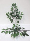 Variegated Ficus Spray