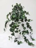 Large Ivy Hanging Bush