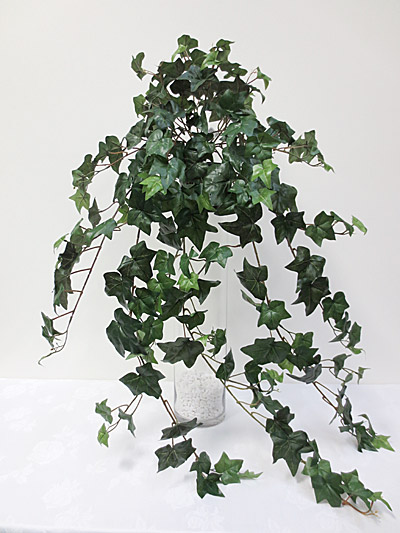 Large Ivy Hanging Bush