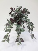 Wandering Jew Bush (Green/Purple)