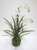 Vanda Orchid Decoration