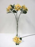 Plumeria (Frangipani) Spray