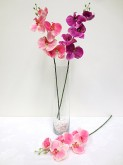 26″ Phalaenopsis Orchid Spray