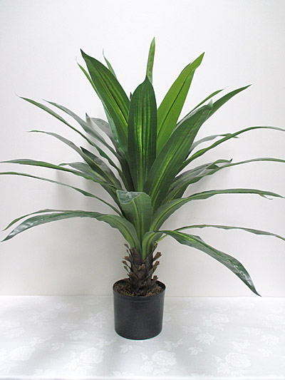 100 cm Potted Dracaena Tree (Green)