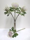 29″ Queen Protea