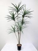 6′ Green Yucca Tree