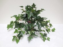 "17"" English Ivy Bush"