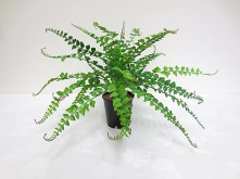 Plastic Wild Fern Grass Bush