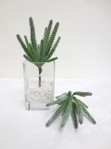 """9"""" Cactus Pick"""