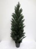 5′ Cedar Tree w/pot