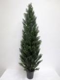 6′ Cedar Tree w/pot