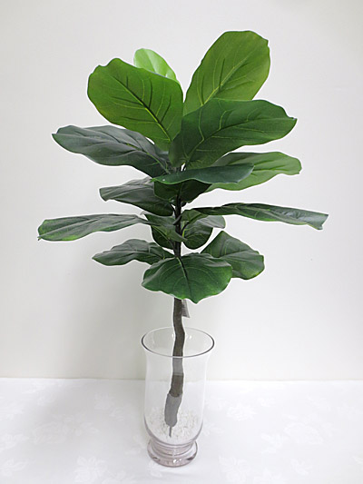 75cm Fiddle Leaf Plant