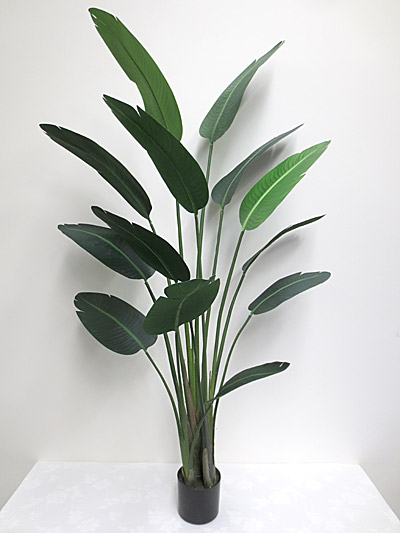 6′ Potted Traveller Palm