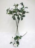 Gardenia Spray