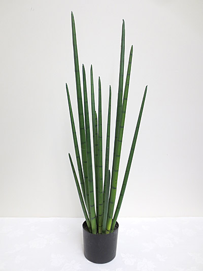3′ Potted Snake Grass Plant