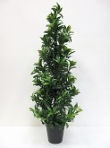 36″ Sweet Bay Tree w/pot
