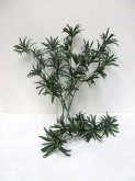 Podocarpus Spray